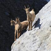 Scoprite la fauna selvaggia vicino al campeggio Guillestre nelle Hautes-Alpes.