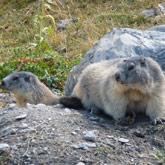 Bezoek de plek waar de marmotten zitten, vlakbij camping de Guillestre.