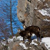 Mélèzes, Chamois of een ander natuurlijk erfgoed uit de Hautes-Alpes regio, Het Regionale natuurpark van Queyras of het Nationale natuurpark Des Écrins.