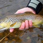 Geniet van het vissen, de rivieren in Les Hautes-Alpes en de forellen smaken er heerlijk ;)